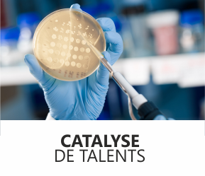 header_catalyse